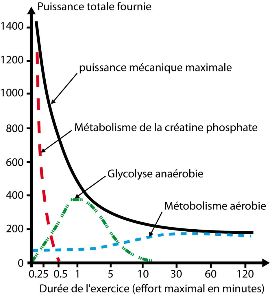les acides gras cours pdf
