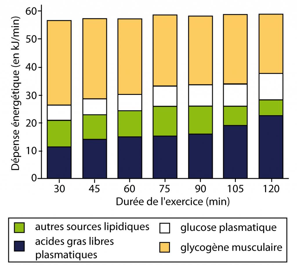 b12e87ee46 Aliments et substrats énergétiques : quelle énergie pour courir ?